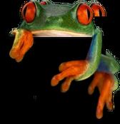 ENL Frog 1 Cap