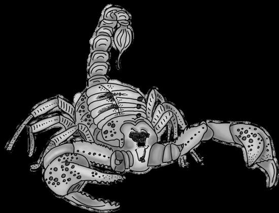 Znak Zodiak Skorpion