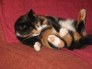 Kubek z kotkiem