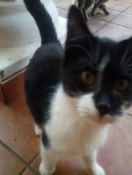 Kubek z kotem Szczęściarzem