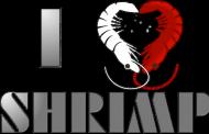 I Love Shrimp - Dziewczynka