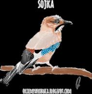 Sójka black