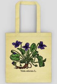 Fiołek wonny (Viola odorata L.) - beżowa