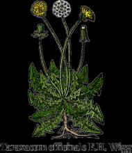 Mniszek pospolity (Taraxacum officinale F.G. Wigg) - beżowa