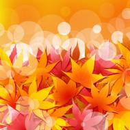 Kolorowa maseczka ochronna wielokrotnego uzytku Jesienne Liscie