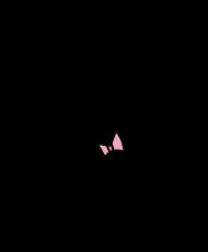 pupa1