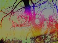 Kolorowe drzewo maseczka