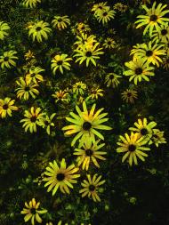 Kwiaty w kominie