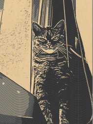 Comic Journey Cat Watching 3 Komin
