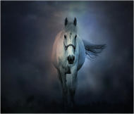 Maseczka Ochronna Fantasy Koń