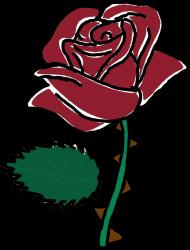 Bejsbolówka ROSE Colection