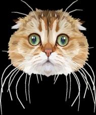 Kot szkocki Torba z Twoim Kotem