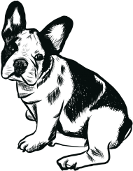 bluza bulldog francuski