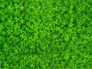 Wiosenna maseczka kolorowa - koniczyny