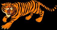 bluza dla chłopaka tygrys