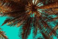 Maseczka bawełniana wielorazowa z filtrem z palmą