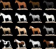 koszulka umaszczenie koni