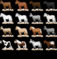 kubek maści koni
