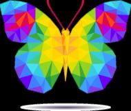 Motyl Kolor Girl