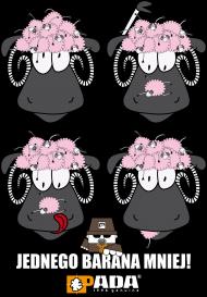 Baran owca. Pada