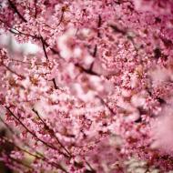 Maseczka w kwiaty