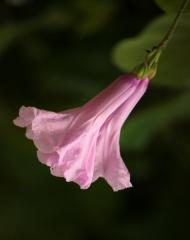 Podkładka Kwiaty Monachium 1