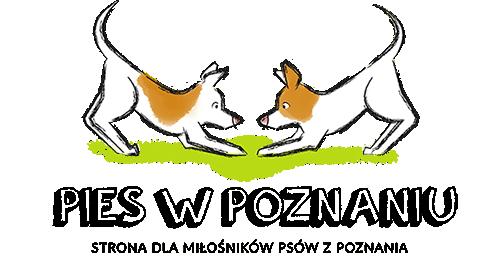 Pies w Poznaniu