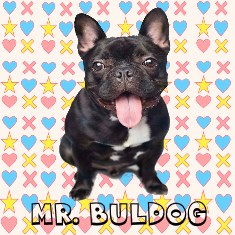 MR. BULDOG